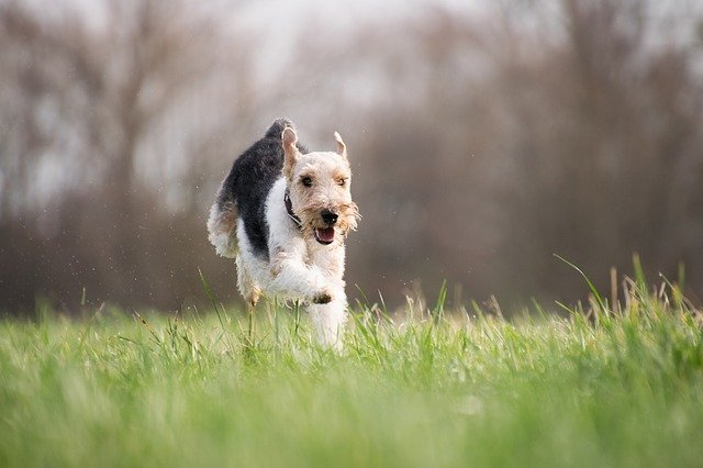 Protect Yourself and Your Pet: Do You Know the ABCs of Lyme Disease?